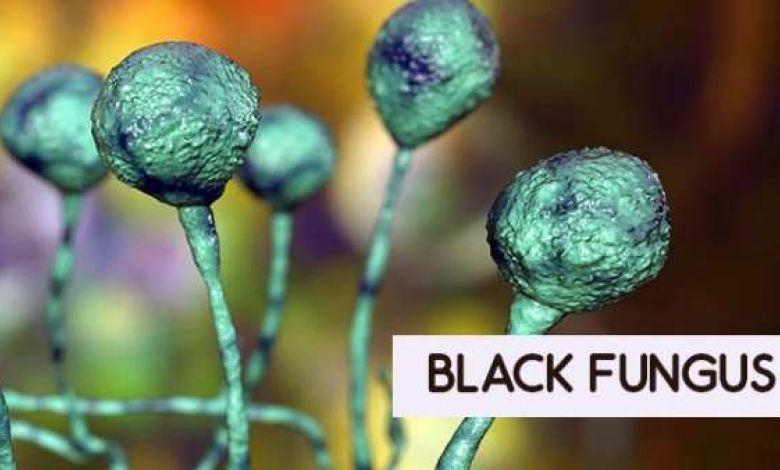 black fungus1 1620809809 1620971336