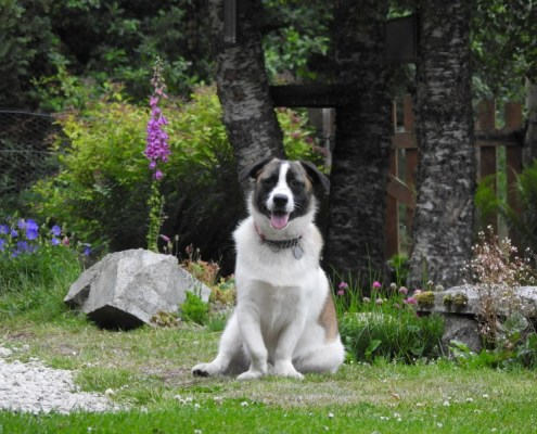 Bertie at Invercassley Cottage