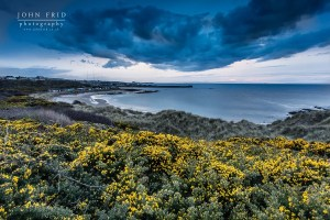 Gorse at Hopeman Bay