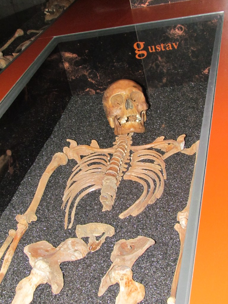 Gustav's skeleton