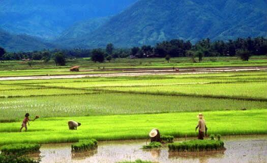 This Thai Agriculture Stock Pays an 8% Yield