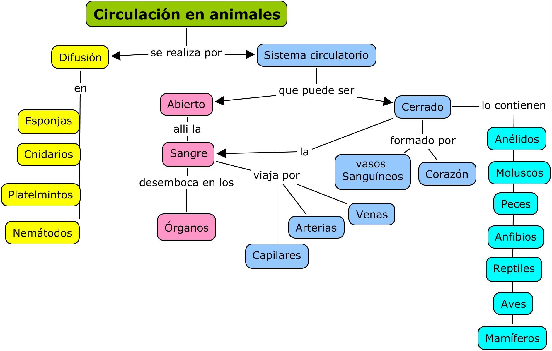 Circuito Sanguineo : Circulación en los seres vivos locos por la ciencia