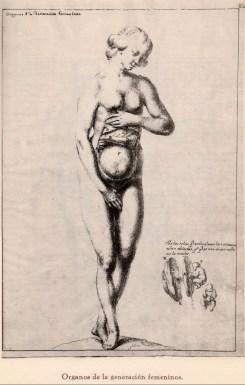 Fray Juan Andrés Rizi. Lámina órganos de generación femeninos. Foto: http://opusincertumhispanicus.blogspot.com.es