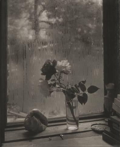 Josef Sudek: Últimas rosas