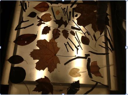 ***leaves on light table