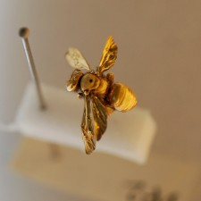 An insect coated in gold for viewing with a scanning electron microscope