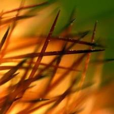 cactus needles - short sell