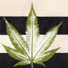 Cannabis Banking in Hawaii
