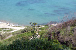 Ortonaの海