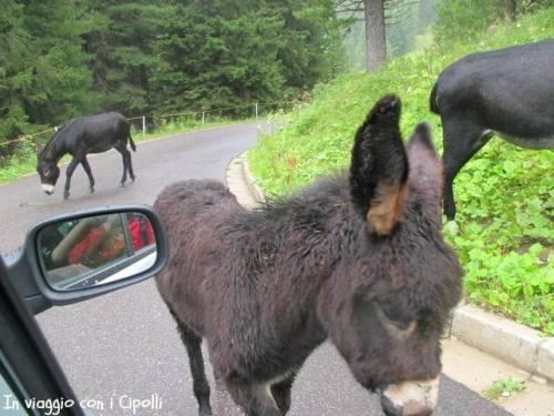 Incontri all'Alpe di Pampeago