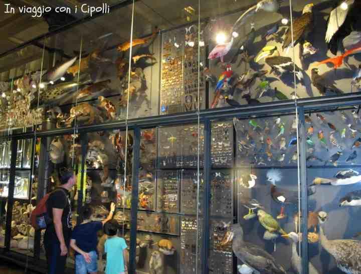 museo delle scienze naturali berlino muro delle biodiversità
