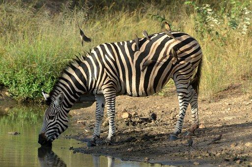 organizzare un viaggio fai da te in sudafrica