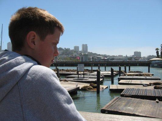 Leoni marini al Pier 39 (San Francisco, Stati Uniti)