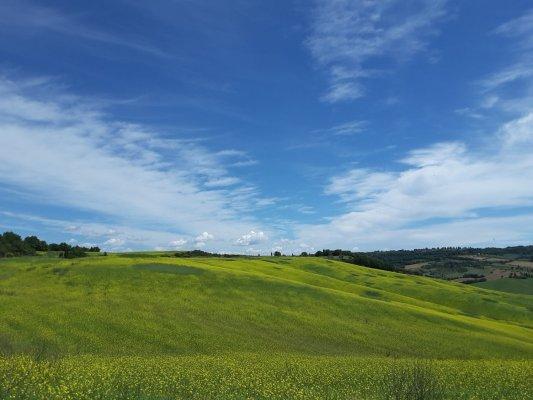 Viaggio in Val d'Orcia, paesaggio nei pressi della Madonna di Vitaleta (Toscana, Italia)