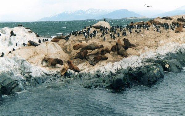 Viaggio in Argentina, Isla de Los Lobos nel Canale di Beagle (Terra del Fuoco)