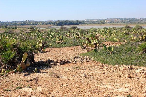 Viaggio in Sicilia, piante di cactus all'interno della Riserva di Vendicari