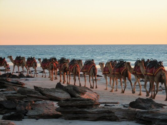 Red Sun Camel Broome