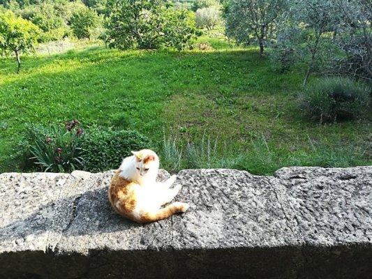 Un gatto a Hum (Colmo) in Istria Croazia