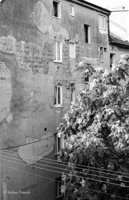 urban art Bratislava