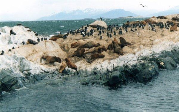 Isla de Los Lobos nel canale Beagle in Argentina