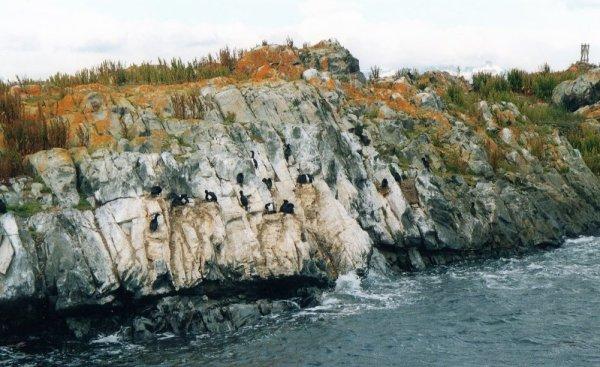 Isla de los Pajaros Canale Beagle