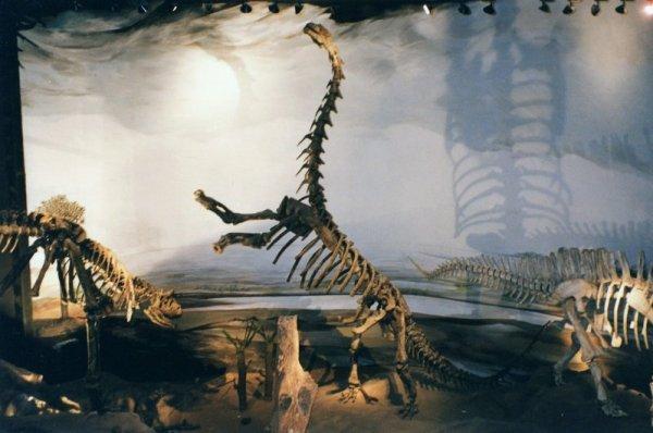 Museo paleontologico Egidio Feruglio di Trelew in Patagonia