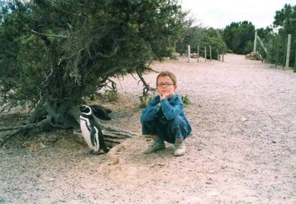 Pinguino Magellano Patagonia
