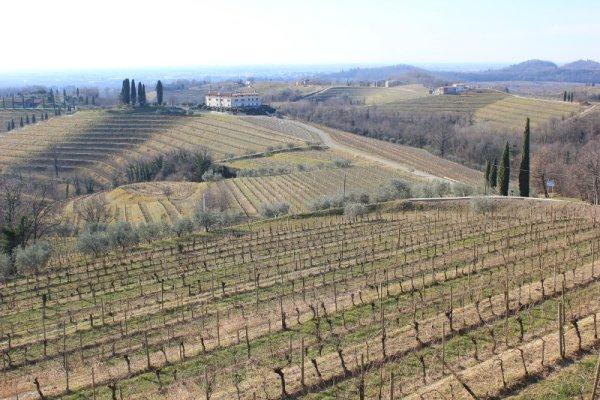 Paesaggio Colli Orientali del Friuli