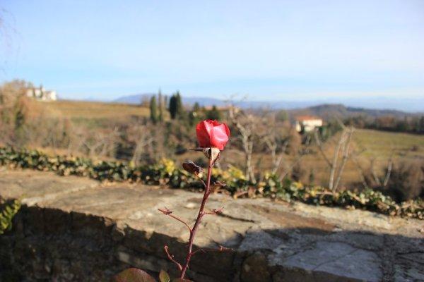 Rose Abbazia di Rosazzo