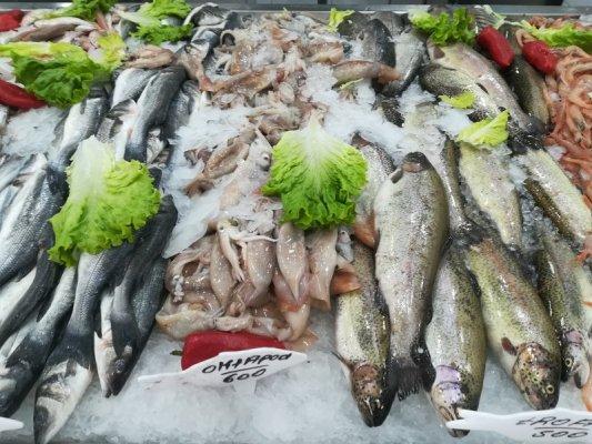 Bancarella del pesce mercato Pazari i Ri Tirana