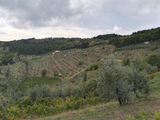 Tenuta dell'Azienda Agricola Altiero (Greve in Chianti)