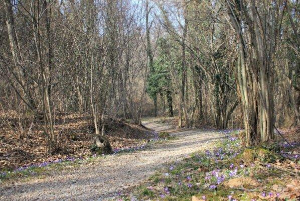 Il sentiero Vita nel Bosco di Plessiva