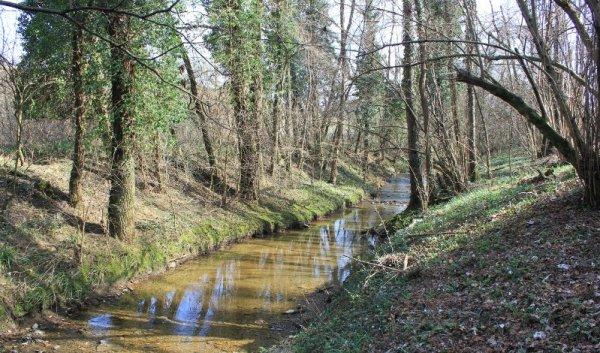 Il Rio Fidri nel Bosco di Plessiva