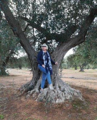 Una pianta di ulivo nel Salento
