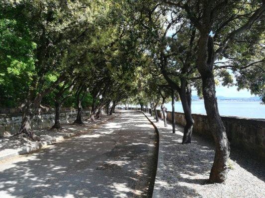 Il Viale dei Lecci a Miramare Trieste