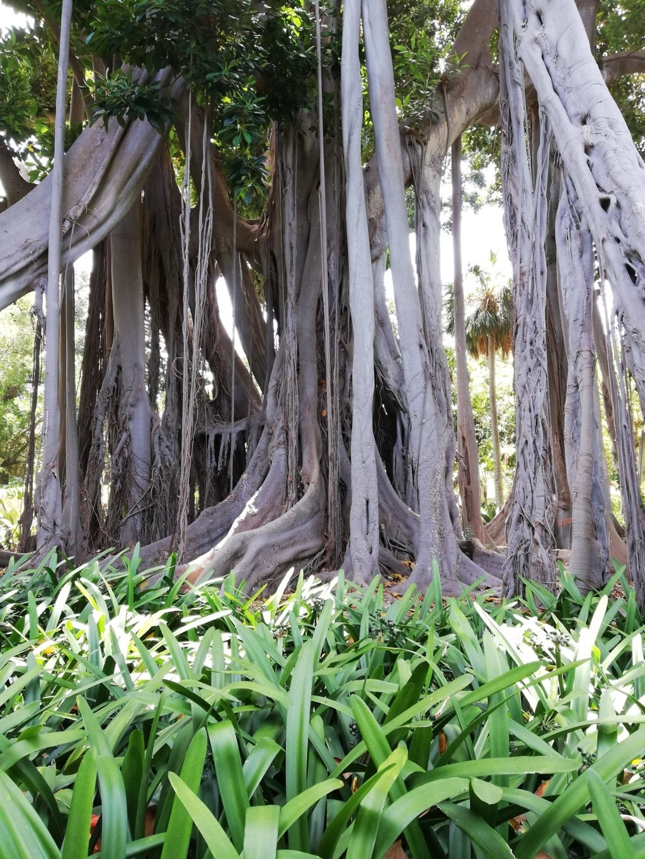 Giardino Botanico Tenerife
