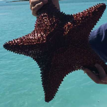 Hotel Review: Parrot Cay, Turks & Caicos