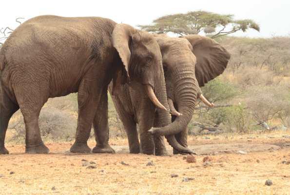 Ivory Only Belongs On Elephants