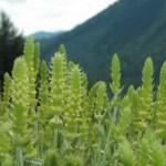 lista de medicamentos tradicionales a base de plantas
