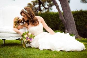 bulldog puppy wedding 2
