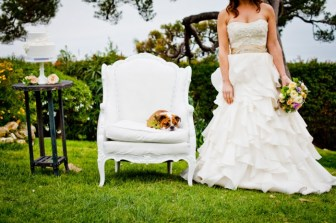 bulldog puppy wedding
