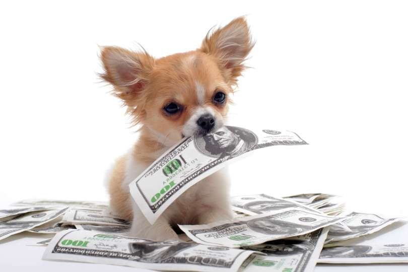 Taking care of dogs will help you make money!