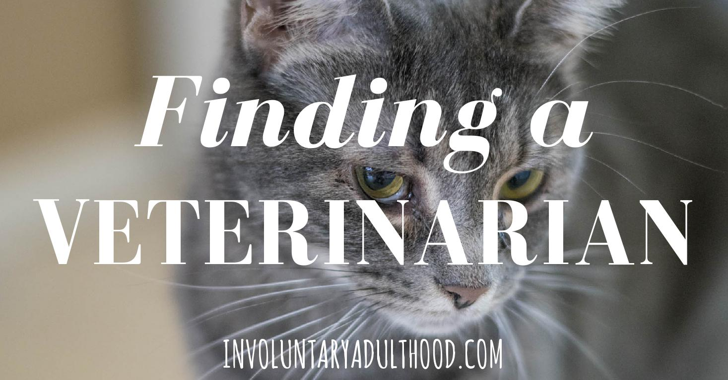 Finding a Veterinarian