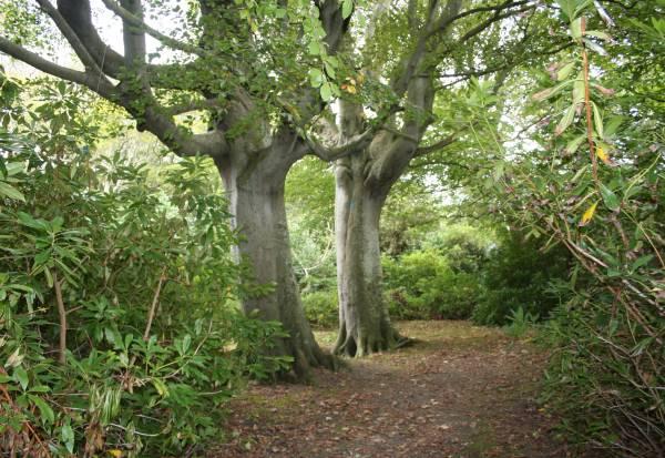 Isle Of Man Guide Bishopscourt Glen