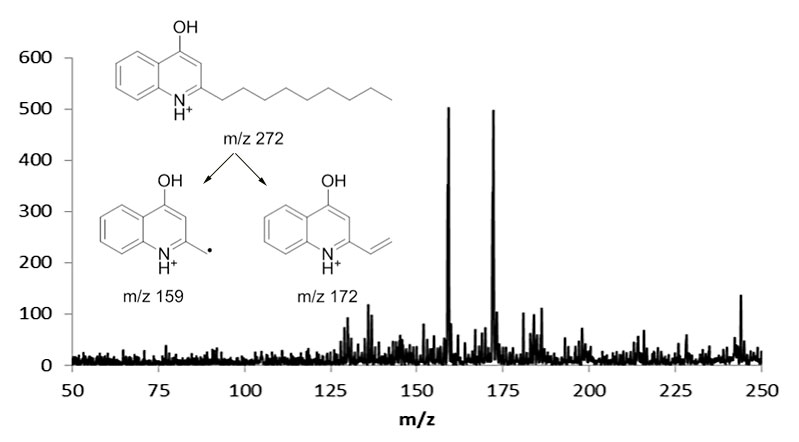 MSMS of 4-hydroxy-2-alkylquinone from ToF-SIMS of Pseudomonas aeruginosa