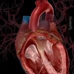 Human Anatomy Atlas ios