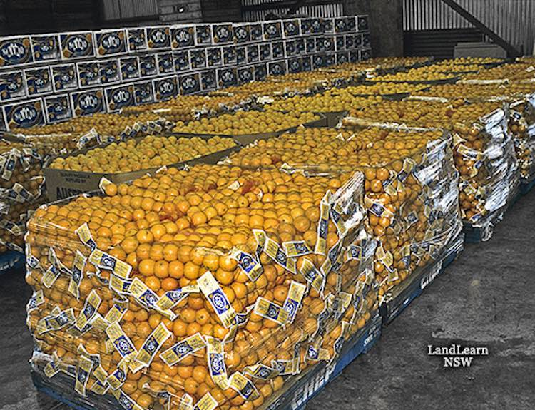Oranges on pallet