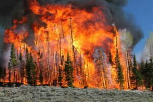 'It's a tinderbox situation': Western governors ask Biden for better wildfire prevention 25