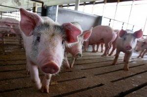 Judge dismisses Iowa lawsuit over California pork regulations 31