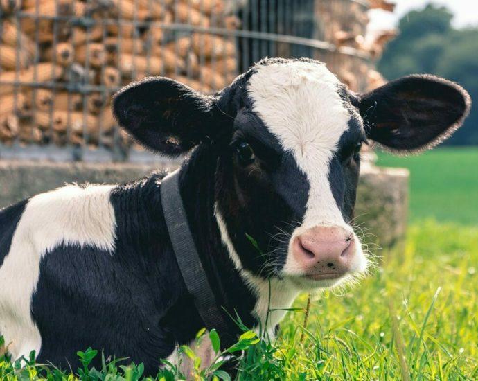 Dairy farmer: Fix 'broken' milk pricing system 7